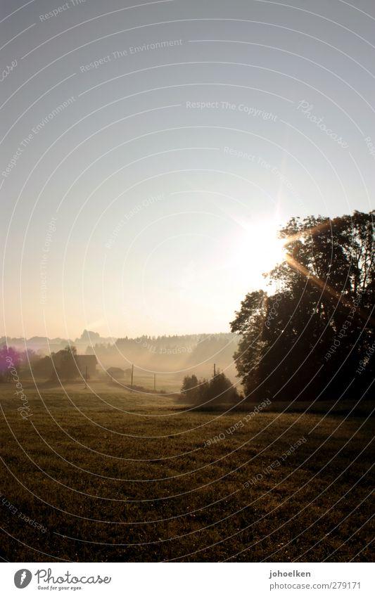 ...hat Gold im Mund blau grün schön Baum Sonne ruhig Erholung Landschaft gelb Wiese Gras Freiheit Stimmung Feld gold Nebel