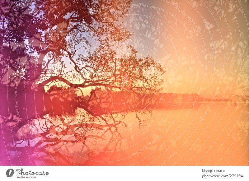 Farben am Seeufer Kunst Maler Umwelt Natur Landschaft Wasser Himmel Wolkenloser Himmel Sonnenaufgang Sonnenuntergang Sommer Schönes Wetter Pflanze Baum