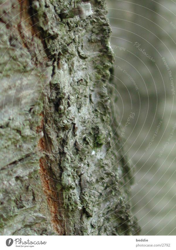 Rinde Baum Baumrinde Vulkankrater Strukturen & Formen
