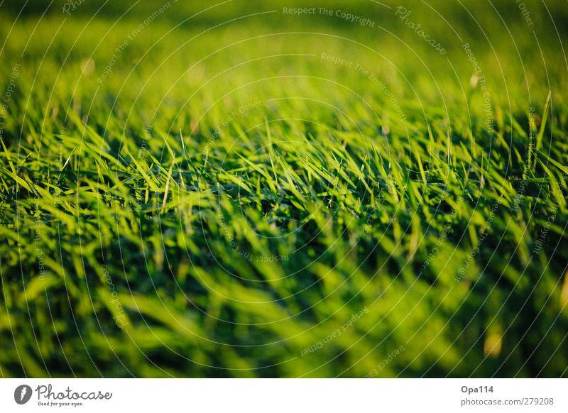 Green Fields Umwelt Natur Landschaft Pflanze Tier Sommer Wetter Schönes Wetter Gras Grünpflanze Garten Park Wiese Feld Erholung Unendlichkeit gelb grün Fernweh
