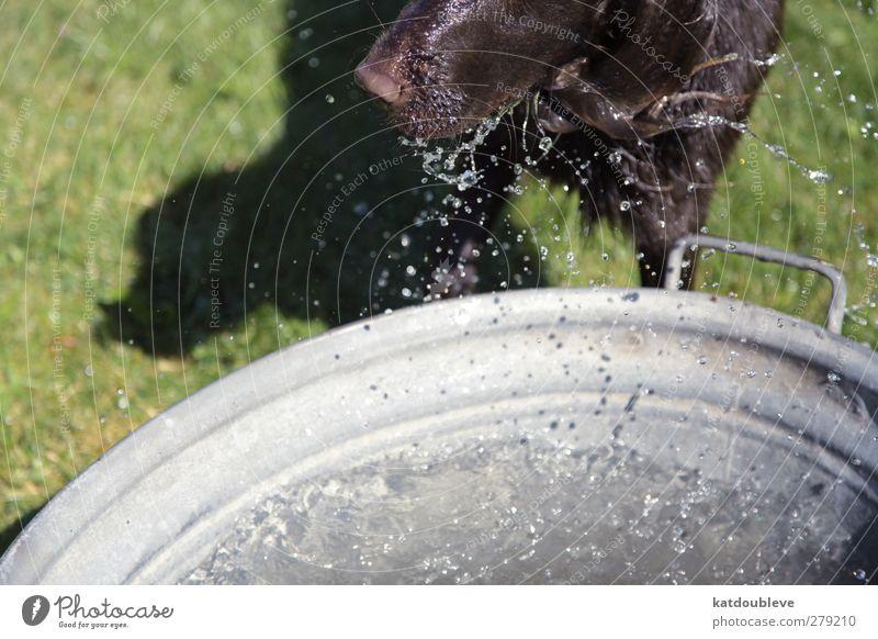 chien d'eau Hund Wasser Sommer Sonne Tier Schwimmen & Baden tauchen Haustier