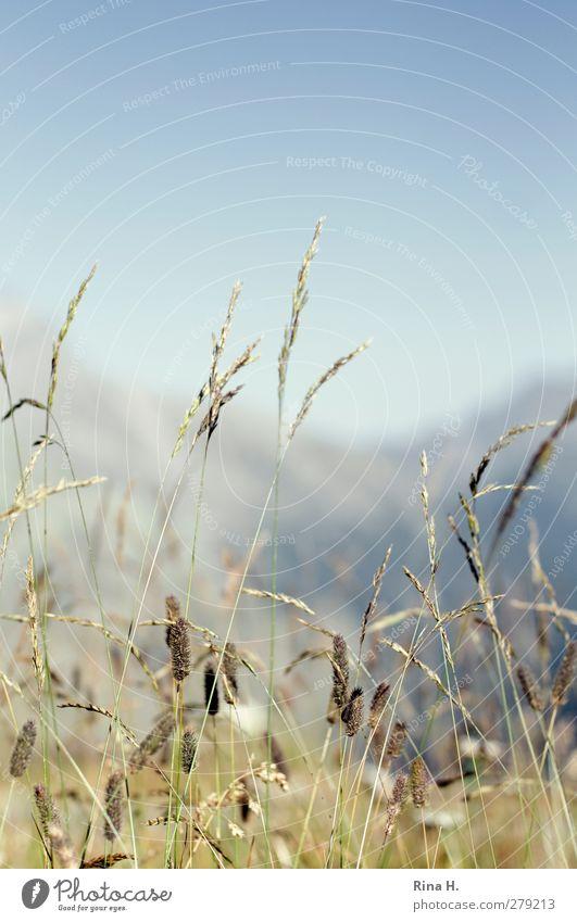 die Seele baumeln lassen Himmel Sommer Erholung Wiese Berge u. Gebirge Gras natürlich Zufriedenheit Schönes Wetter Alpen Lebensfreude