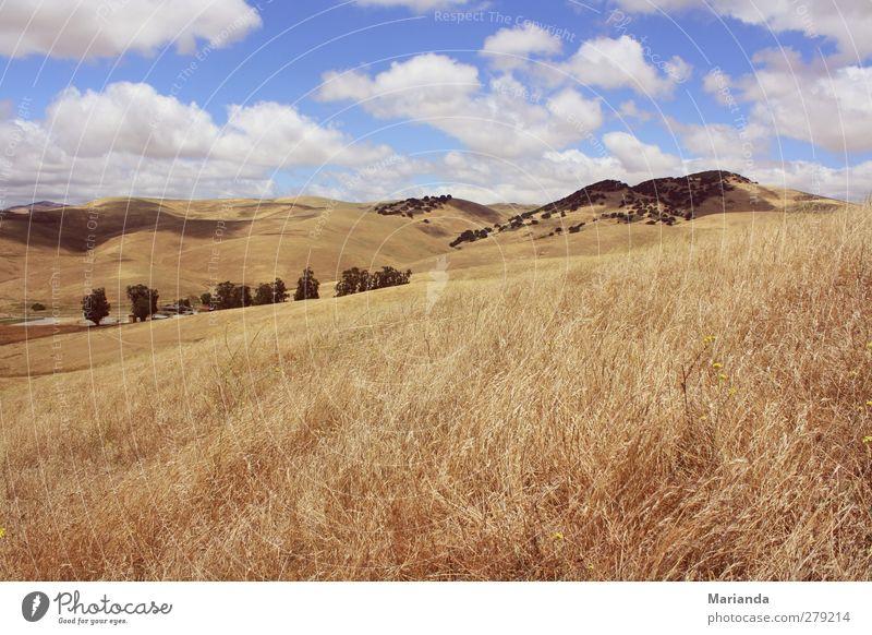 Wolken Ferne Freiheit Natur Landschaft Erde Luft Himmel Gras Hügel träumen Unendlichkeit endlos vorrüberziehen Kalifornien Livermore country Farbfoto