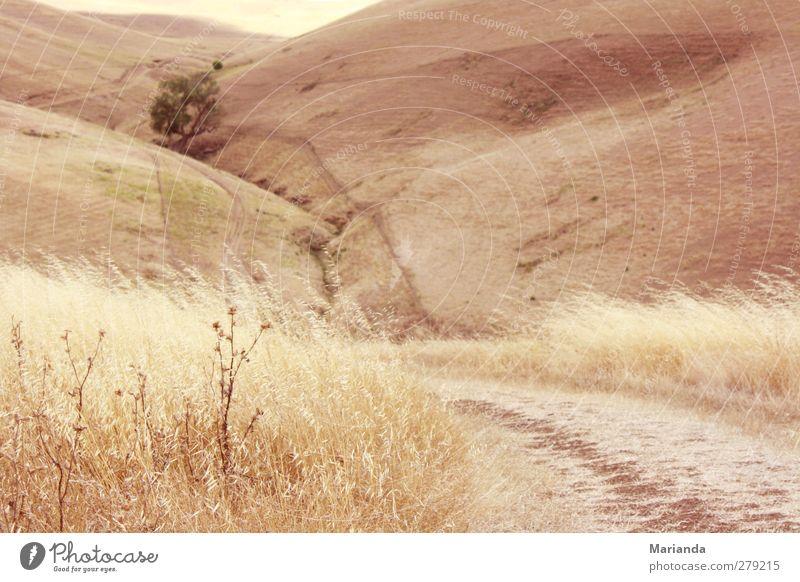 Der Weg. Natur Sommer Pflanze Baum ruhig Gras Glück Traurigkeit träumen Stimmung Feld Erde Wind natürlich Zufriedenheit frei