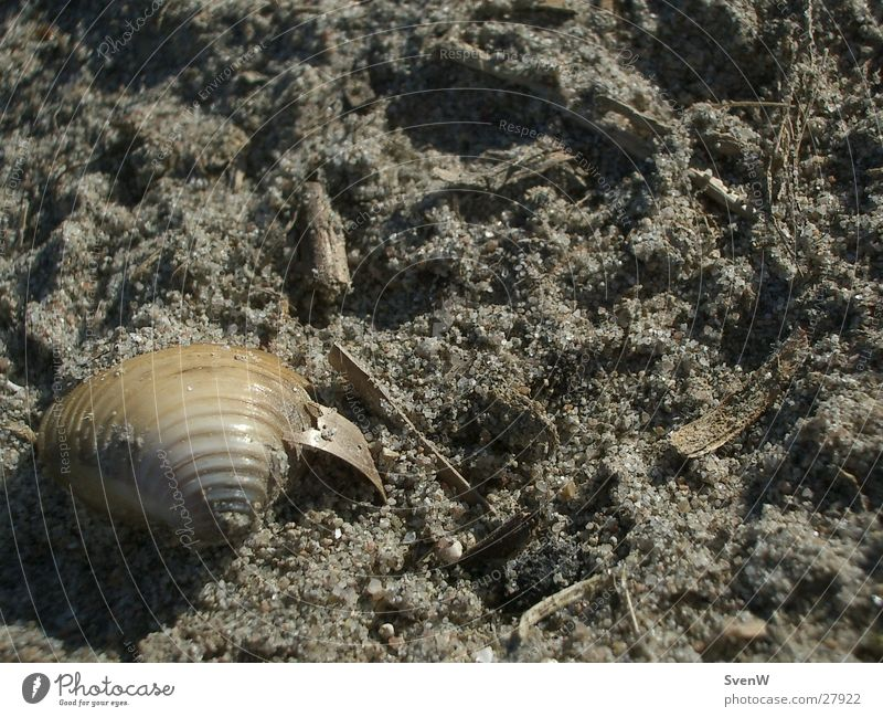 Muschel am Strand Sand