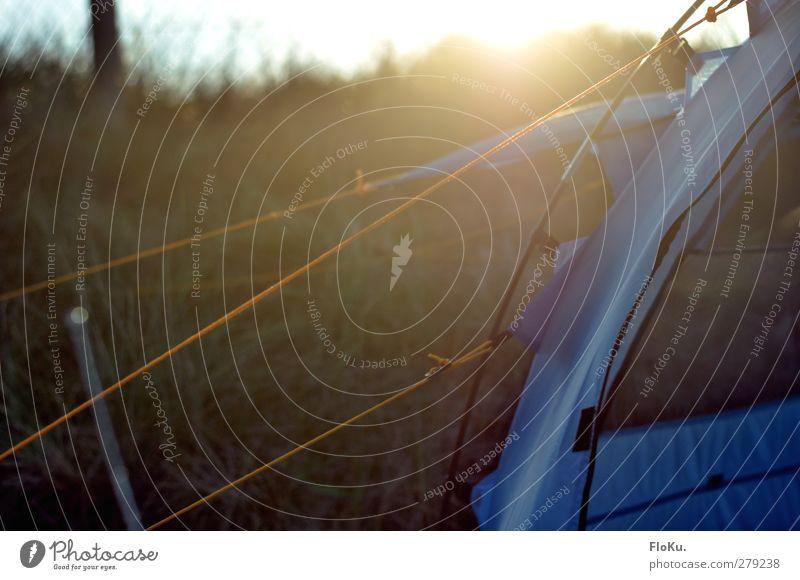Zelt steht Ferien & Urlaub & Reisen Ausflug Abenteuer Ferne Freiheit Expedition Camping Umwelt Natur Sonne Sonnenlicht Kunststoff Schnur Knoten hell blau gelb