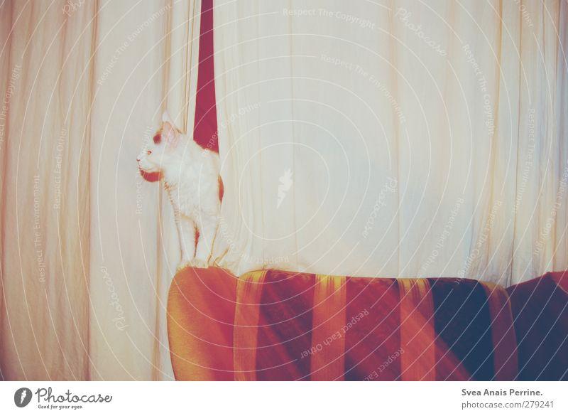 retro tiger II Katze Tier stehen retro Sofa Wohnzimmer Vorhang Haustier trashig Gardine Sessel Sessellehne