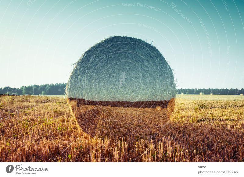Feldversuch Getreide Sommer Umwelt Natur Landschaft Himmel Horizont Klima Klimawandel Schönes Wetter Wärme Wachstum nachhaltig rund blau gelb gold