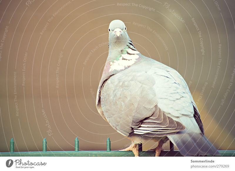 Was guckst du? Natur grün Tier Einsamkeit Umwelt grau Metall Vogel braun Wildtier sitzen warten Feder beobachten weich einfach