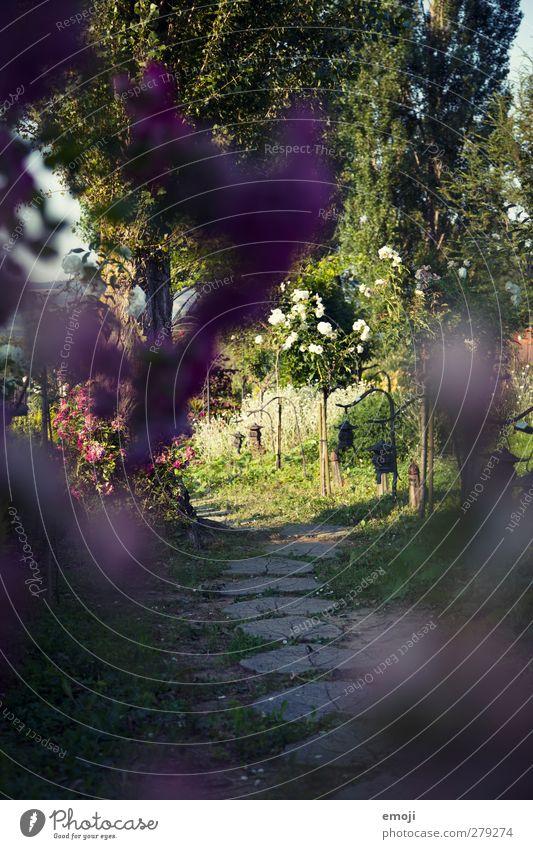 Garten Umwelt Natur Landschaft Frühling Pflanze Baum Sträucher Grünpflanze Park natürlich grün Wege & Pfade Farbfoto Außenaufnahme Menschenleer Tag Licht