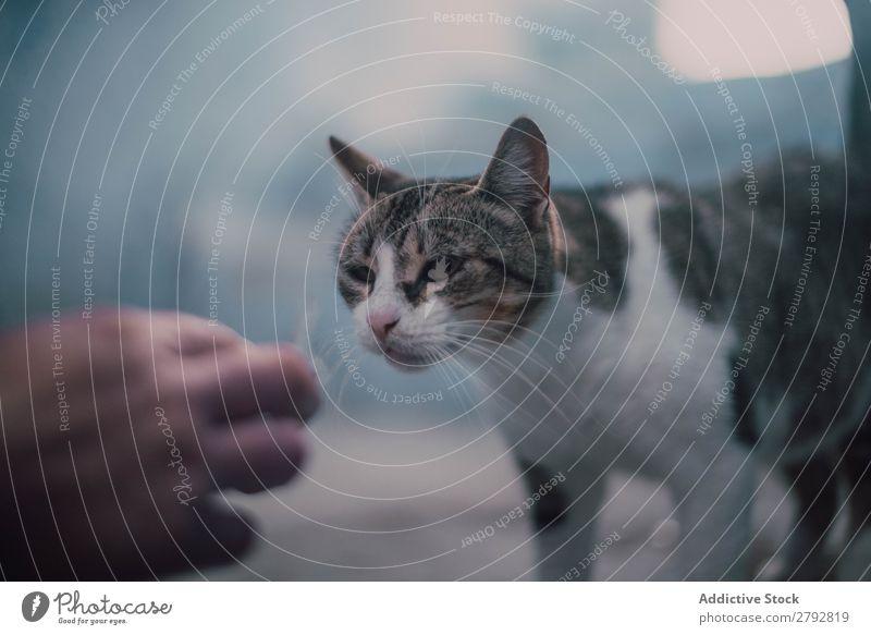 Ernte Handfütterung Katze Straße Tier Irrläufer Haustier Pelzmantel Katzenbaby Jugendliche niedlich Säugetier schön Stadt Chechaouen Marokko heimisch