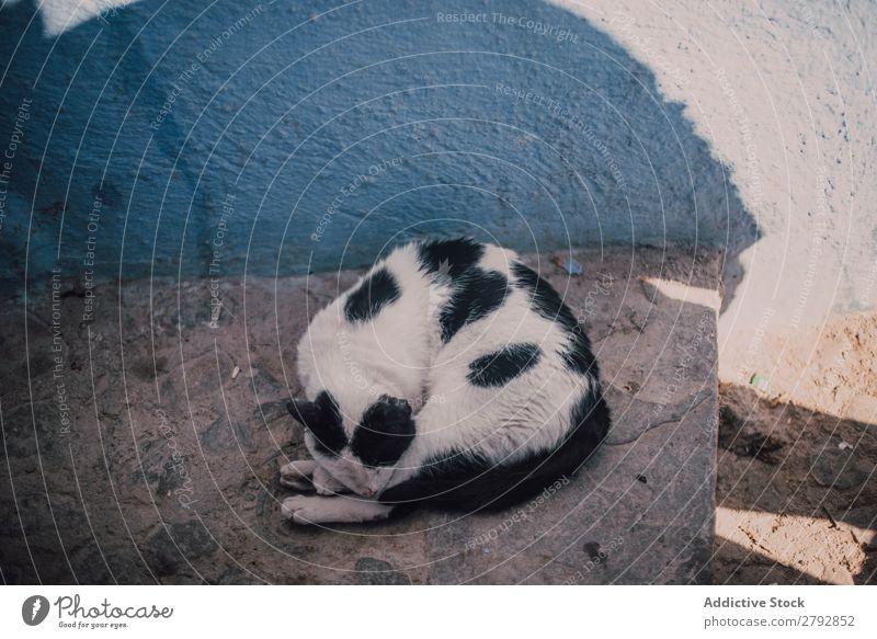 Verlassene schmutzige Katze auf der Straße obdachlos Tier Irrläufer Haustier Pelzmantel Katzenbaby Jugendliche niedlich Säugetier schön Stadt Chechaouen Marokko