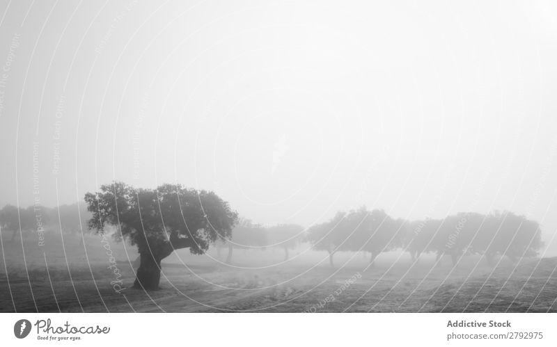 Bäume auf dem Feld zwischen Gras im Nebel Baum Holz Wiese dunkel Himmel Wolken Wachstum wild Natur Zweig Ast Park trist Himmel (Jenseits) Leben grün Oberfläche