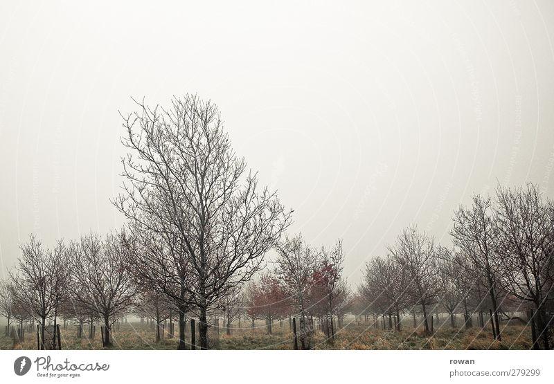 ::::::::::: Umwelt Natur Landschaft Pflanze Herbst Wetter schlechtes Wetter Unwetter Nebel Regen Baum Gras Sträucher Garten Park Wald dunkel gruselig kalt nass