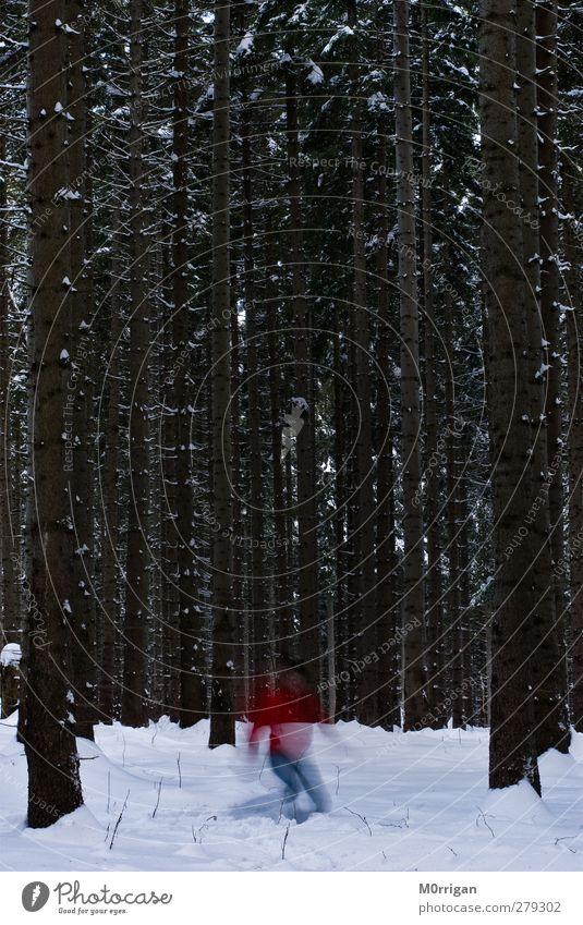 Im Wald Mensch Natur weiß Baum rot Winter kalt Schnee Bewegung braun Eis Angst laufen wandern Ausflug