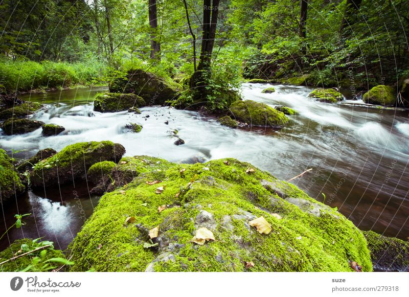 Stonewash Umwelt Natur Landschaft Pflanze Urelemente Wasser Moos Felsen Flussufer Oase Stein Wachstum frisch nachhaltig nass natürlich grün Idylle bewachsen