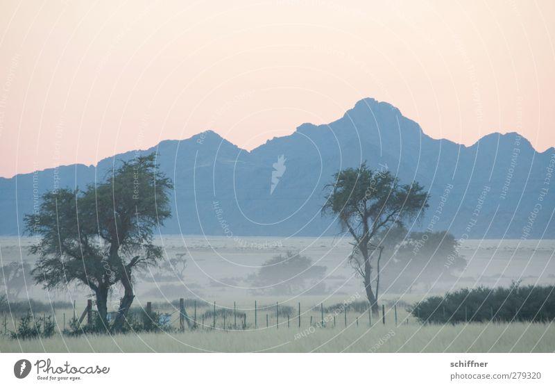 Bodennebel Natur Baum ruhig Landschaft Umwelt Berge u. Gebirge Nebel Sträucher Wüste geheimnisvoll Fernweh Pastellton Namibia Morgennebel Namib Bodennebel