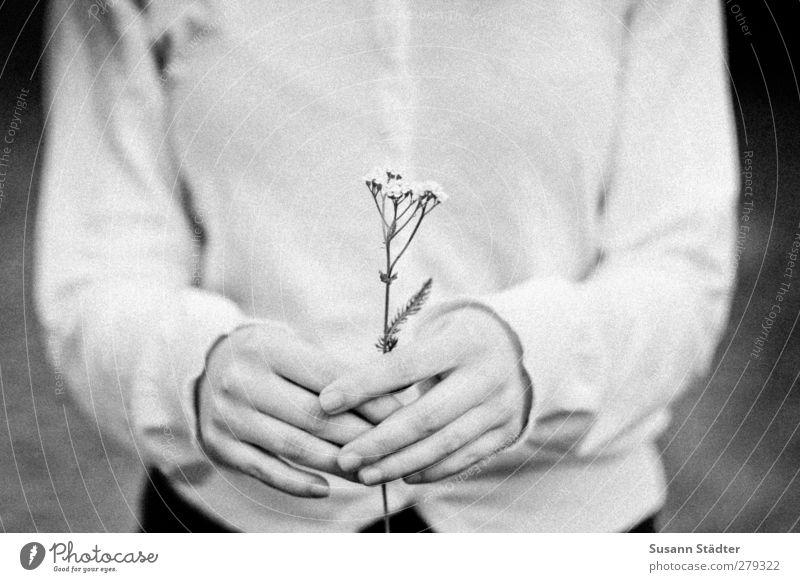 für dich. Frau Erwachsene Arme Hand Finger 1 Mensch 18-30 Jahre Jugendliche authentisch Liebe Geschenk Blumenwiese Blumenstrauß schenken geben festhalten