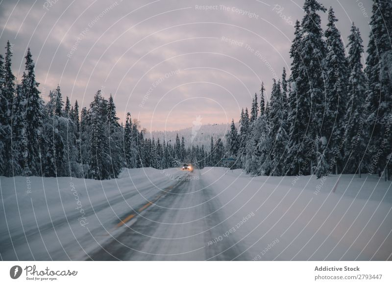 Auto auf verschneiter Straße am Waldrand PKW Winter Landschaft Arktis Schnee Ausritt Himmel Wolken Wetter Menschenleer Baum Konifere Asphalt Wege & Pfade