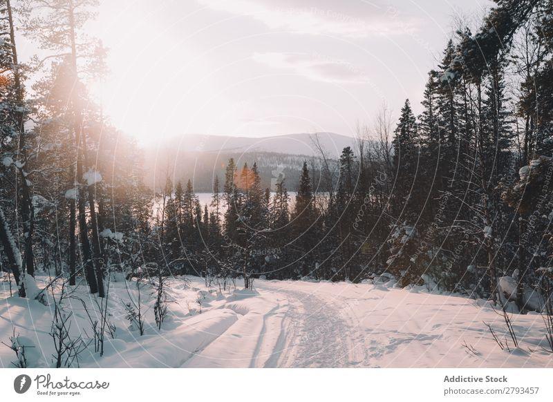 Verschneite Straße am Waldrand Winter Landschaft Arktis Schnee Himmel Wolken Wetter Menschenleer Baum Konifere Asphalt Wege & Pfade Ferien & Urlaub & Reisen
