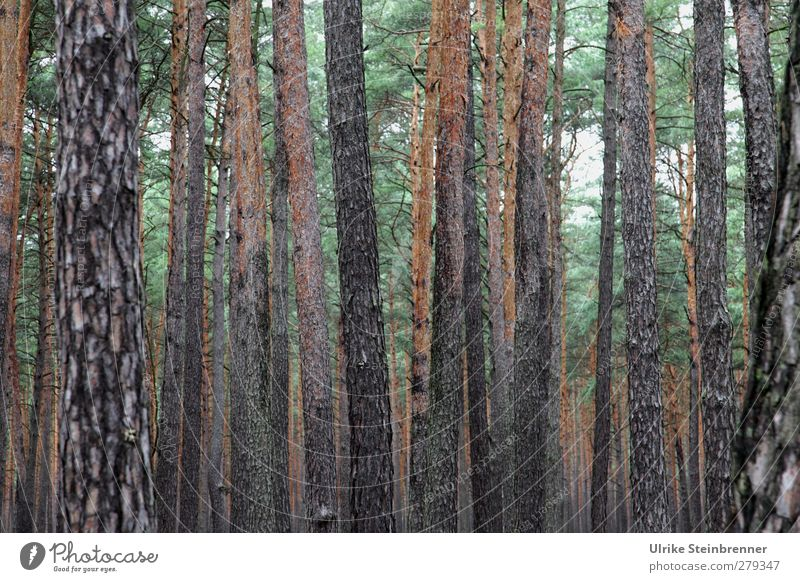 Fläming Natur Ferien & Urlaub & Reisen Pflanze grün Sommer Baum Landschaft ruhig Wald Umwelt natürlich Gesundheit grau Tourismus Wachstum Kraft