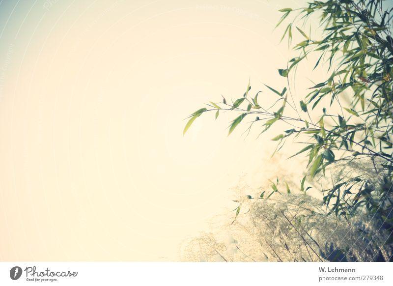 Oh Happy Day! Natur Pflanze Sonne Landschaft Umwelt Gras Frühling Wetter Jahreszeiten Müdigkeit Wolkenloser Himmel Bambus