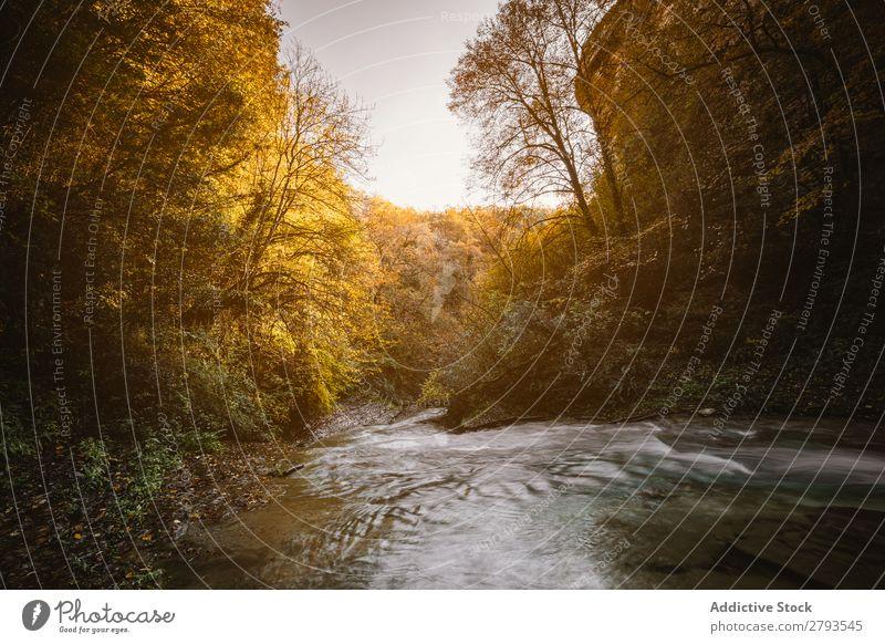 Fluss in der Mitte des Waldes national Park Bach klein Berge u. Gebirge strömen Herbst Baum Landschaft Natur Beautyfotografie Zinke Hintergrundbild natürlich