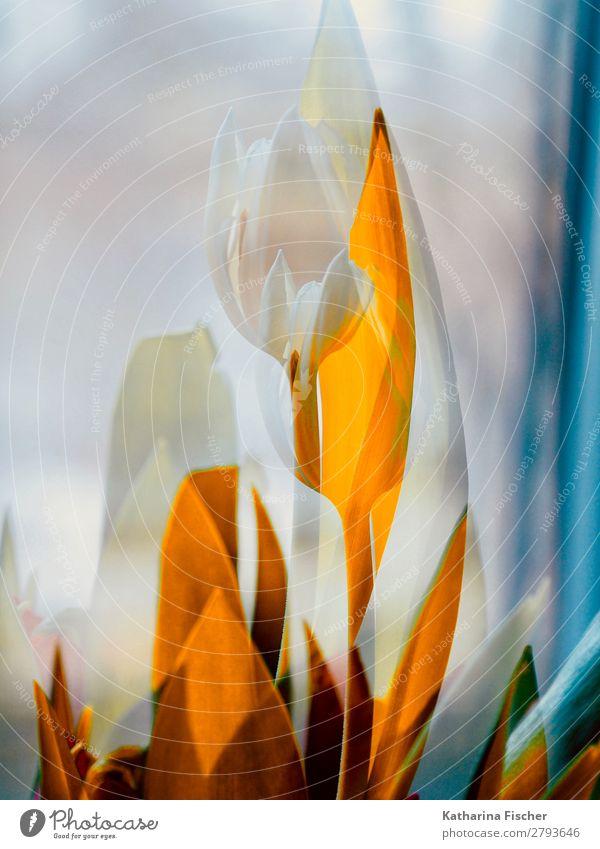 weiße Blume orange Blätter Kunst Natur Pflanze Frühling Sommer Herbst Winter Tulpe Blatt Blüte Blumenstrauß Blühend leuchten gelb gold türkis einzigartig Stil