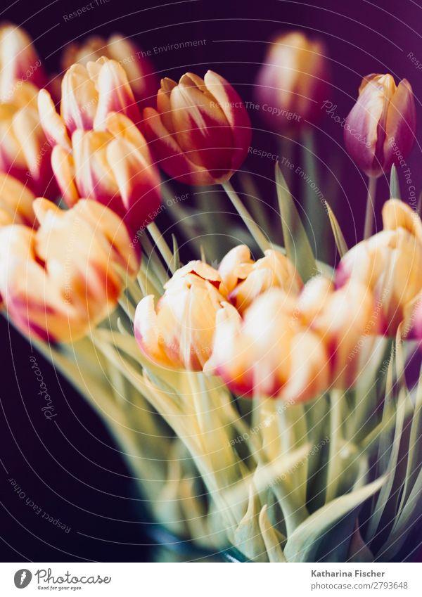 Frühling Tulpen Blumenstrauß gelb rot orange Natur Pflanze Sommer Herbst Blatt Blüte Blühend leuchten Duft schön mehrfarbig grün violett rosa türkis weiß