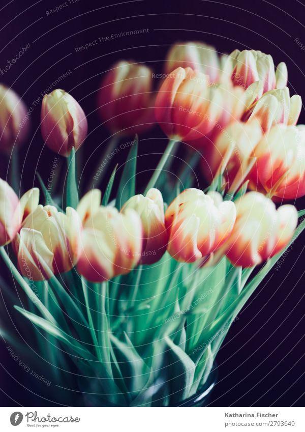 Tulpen gelb orange rot Blumenstrauß Natur Pflanze Frühling Sommer Herbst Blatt Blüte Blühend leuchten grün rosa türkis weiß Frühlingsgefühle Vorfreude Farbfoto