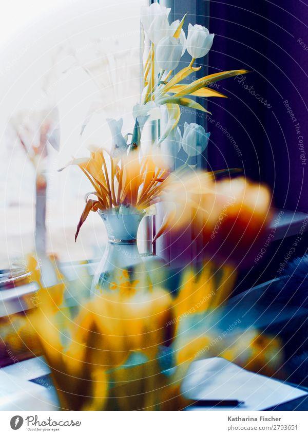 Blumen Blumenstrauß weiß orange Doppelbelichtung Kunst Natur Pflanze Frühling Sommer Herbst Winter Tulpe Blatt Blühend leuchten außergewöhnlich schön gelb gold