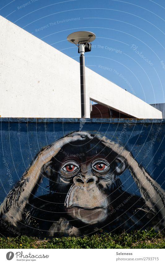 . Sommer Mauer Wand Fassade Tier Affen Schimpansen Graffiti berühren träumen Traurigkeit Sorge Straßenkunst Kunst Farbfoto Außenaufnahme Menschenleer Tag
