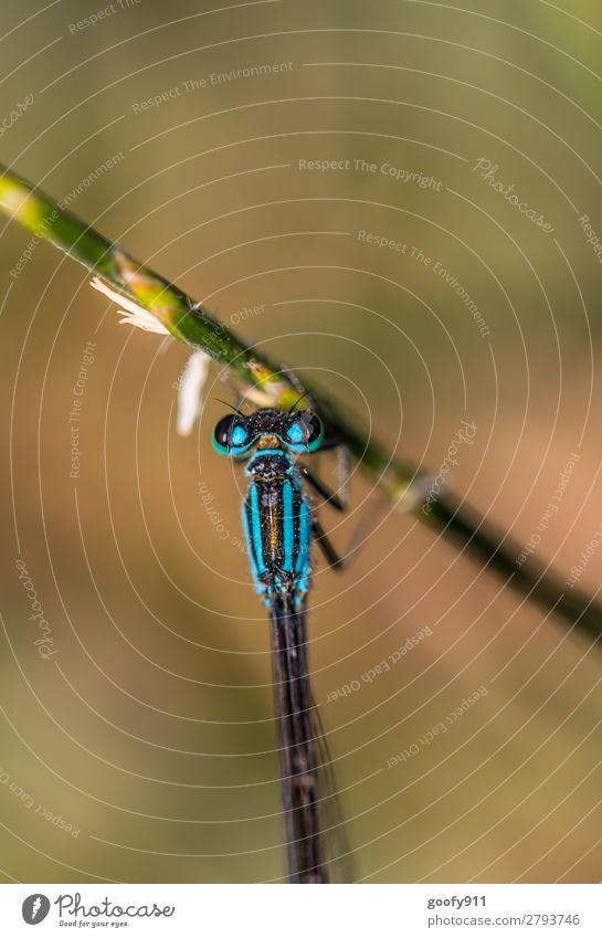 Blaue Libelle Natur Sommer Tier Frühling Wiese Gras Garten Ausflug Park Wildtier Abenteuer Sträucher Flügel festhalten Urwald Tiergesicht