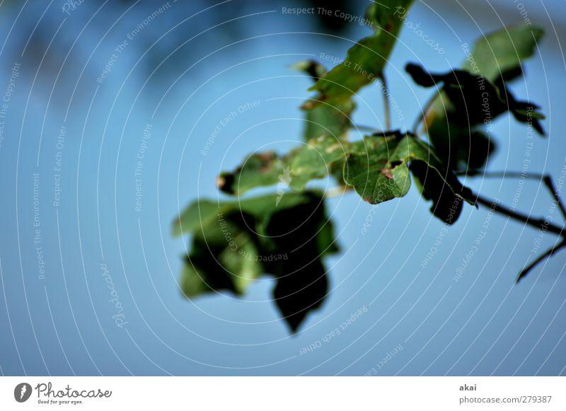 f 5.6 Natur Pflanze Himmel Baum Park Wald blau grün Blatt Farbfoto Außenaufnahme Tag Unschärfe Schwache Tiefenschärfe Zentralperspektive