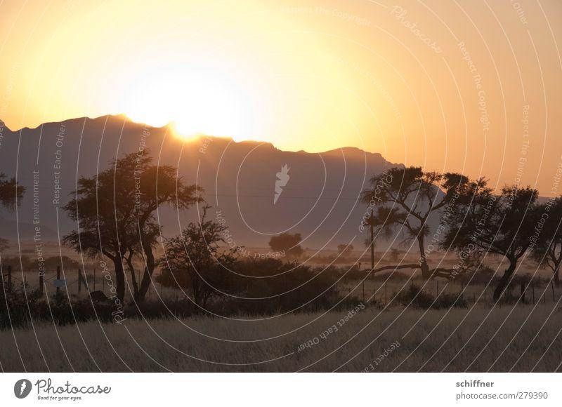 Über die Kante blinzeln Umwelt Natur Landschaft Wolkenloser Himmel Sonne Sonnenaufgang Sonnenuntergang Schönes Wetter Pflanze Baum Gras Sträucher