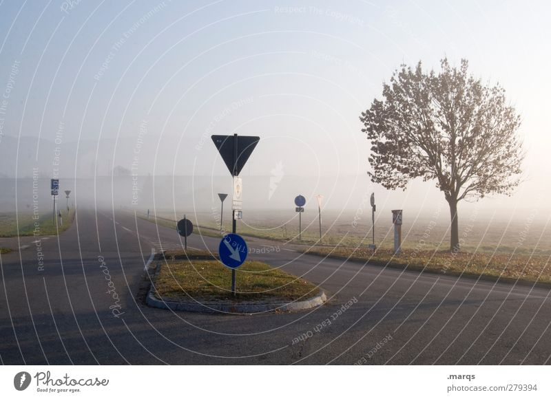 Kreuzung Umwelt Natur Landschaft Wolkenloser Himmel Herbst Klima Wetter Nebel Baum Verkehr Verkehrswege Straße Straßenkreuzung Wege & Pfade Verkehrszeichen