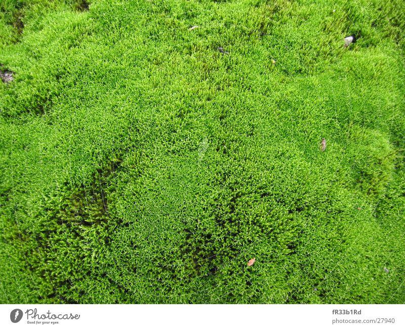 MicroForrest grün Pflanze Wald weich Moos
