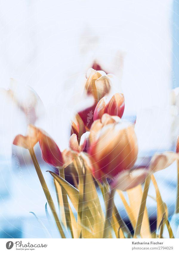 Blumenstrauß verblüht Kunst Natur Pflanze Frühling Sommer Herbst Winter Tulpe Blatt Blüte Blühend leuchten gelb gold orange rosa rot weiß Kreativität