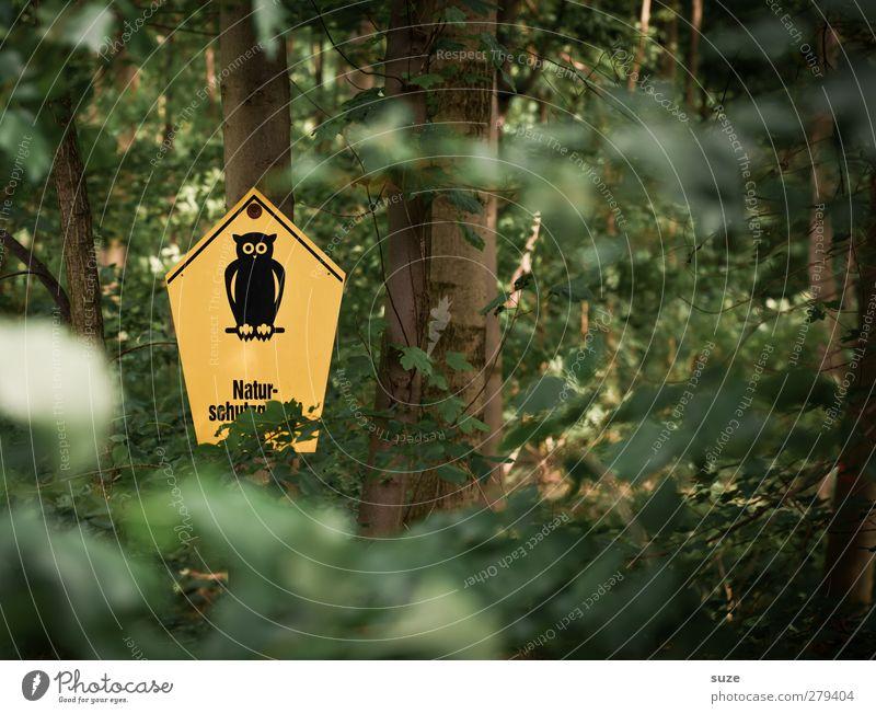 Waldwächter Umwelt Natur Urelemente Sommer Klima Pflanze Baum Blatt Schilder & Markierungen Wachstum gelb grün Umweltschutz Eulenvögel bewachsen Warnhinweis