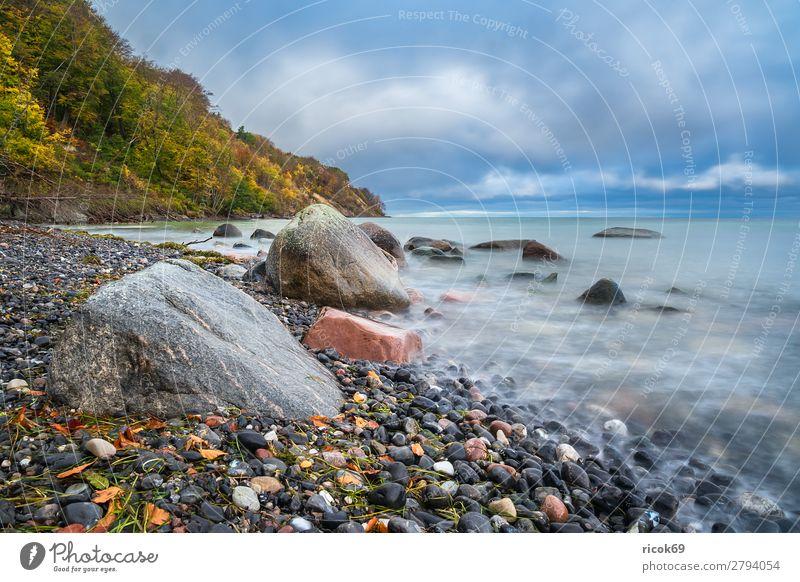 Ostseeküste auf der Insel Moen in Dänemark Ferien & Urlaub & Reisen Natur blau Wasser Landschaft Baum Meer Erholung Wolken Wald Strand Herbst Umwelt Küste