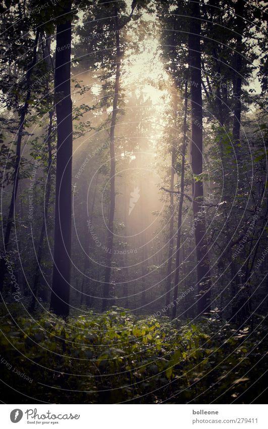 Neulich im Grafenberger Wald Natur Pflanze grün Sommer Baum Sonne Erholung Landschaft ruhig schwarz Umwelt Gefühle träumen gold ästhetisch