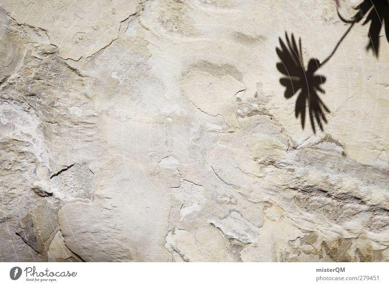 Mauerblümchen. Kunst ästhetisch Blume Mauerpflanze ruhig dezent Schatten Einsamkeit schön verborgen Natur Farbfoto Gedeckte Farben Außenaufnahme Nahaufnahme