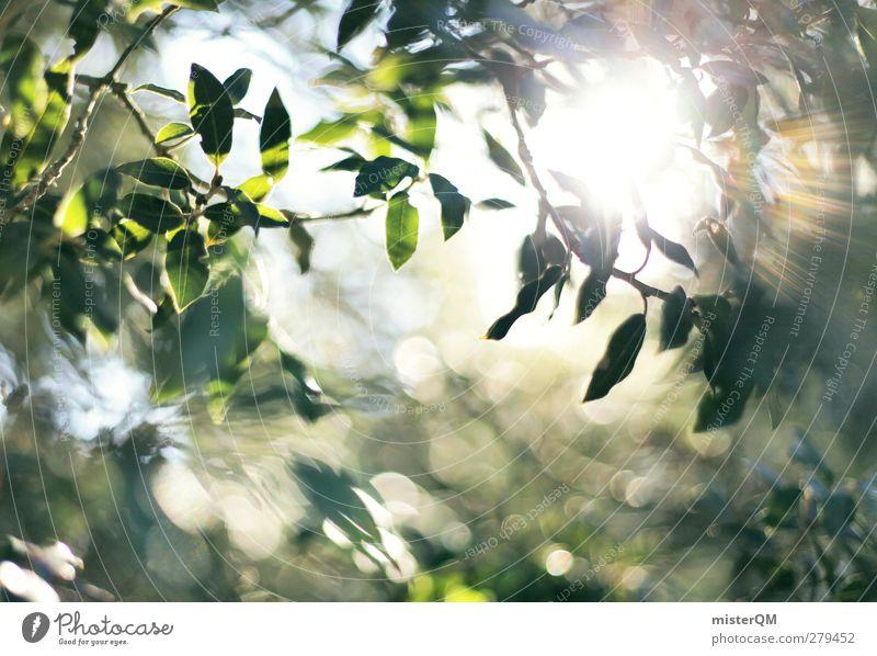 Pure Light. Sonne Wald Kunst Zufriedenheit ästhetisch Urwald Lichtspiel Lichtpunkt Lichtbrechung Lichtstrahl Waldlichtung Lichtschein Lichteinfall