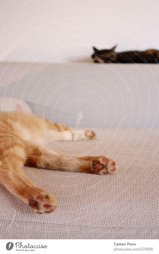 just gämmling Wohnung Sofa Raum Wohnzimmer Tier Haustier Katze Fell Pfote 2 Erholung genießen liegen schlafen träumen einfach Zusammensein nah natürlich