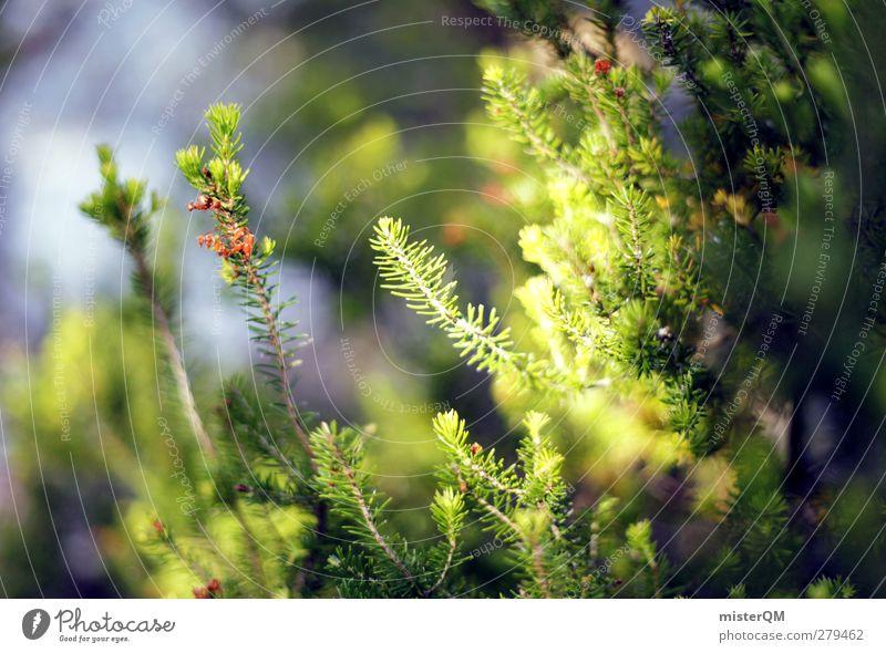 Der Sonne entgegen. Kunst ästhetisch grün Waldboden Nadelwald Nadelbaum Wachstum Licht Waldlichtung Natur Landschaft ruhig Makroaufnahme Farbfoto