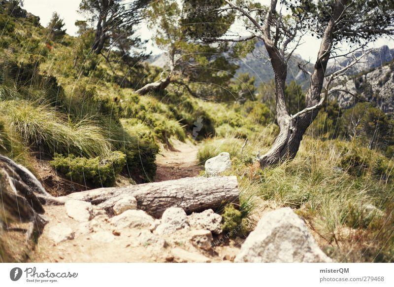 somewhere magic. Natur Pflanze Baum Wald Landschaft Umwelt Wege & Pfade Freiheit Erde wandern ästhetisch Fußweg Spanien Mallorca steinig Hochebene