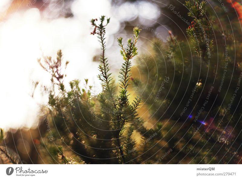 Weg zur Sonne. Umwelt Natur Landschaft Pflanze ästhetisch Waldboden Licht Lichtspiel Lichterscheinung Lichtschein Lichtbrechung Lichteinfall grün Naturerlebnis