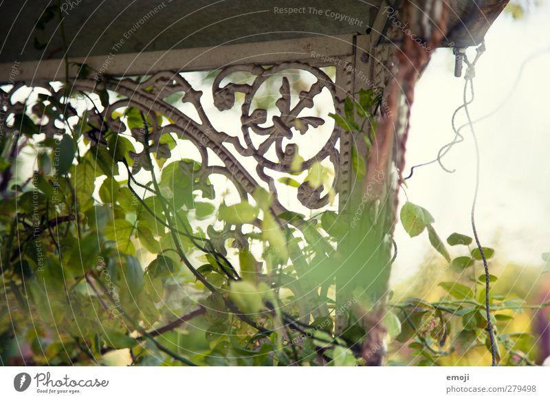garden Natur grün Pflanze Landschaft Umwelt Garten Park natürlich Sträucher Ornament