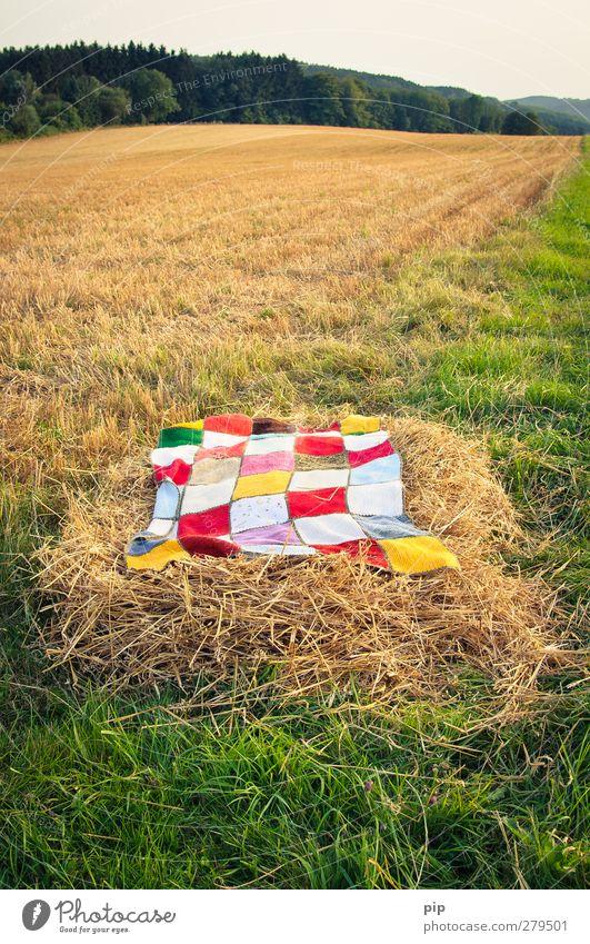 ein bett im stoppelfeld Natur Wolkenloser Himmel Sommer Schönes Wetter Gras Stroh Stoppelfeld Wiese Feld Wald Gelassenheit Decke strohbett gemütlich Horizont