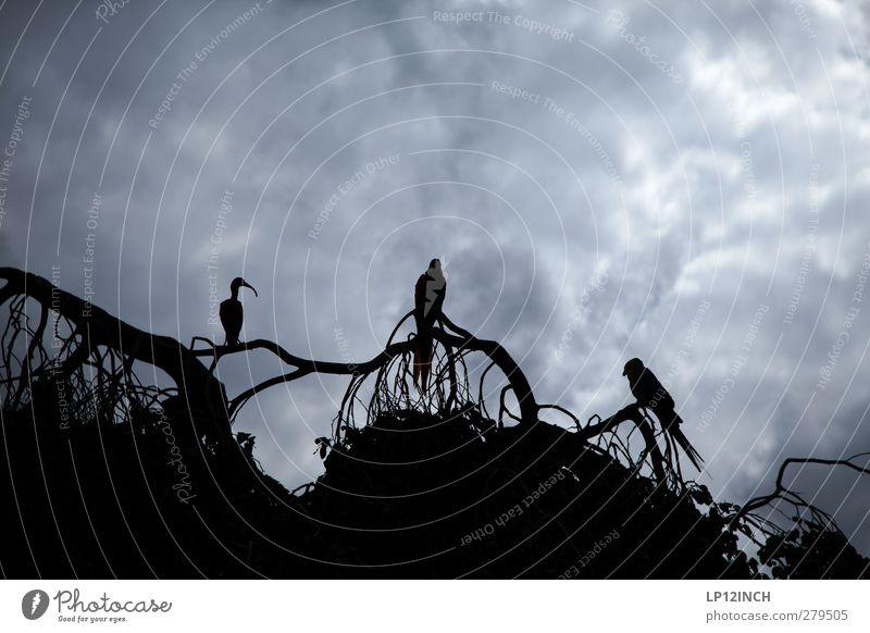 3 Freunde Natur blau Ferien & Urlaub & Reisen Tier schwarz Ferne kalt Freiheit grau Vogel außergewöhnlich Wildtier warten Tourismus Ausflug